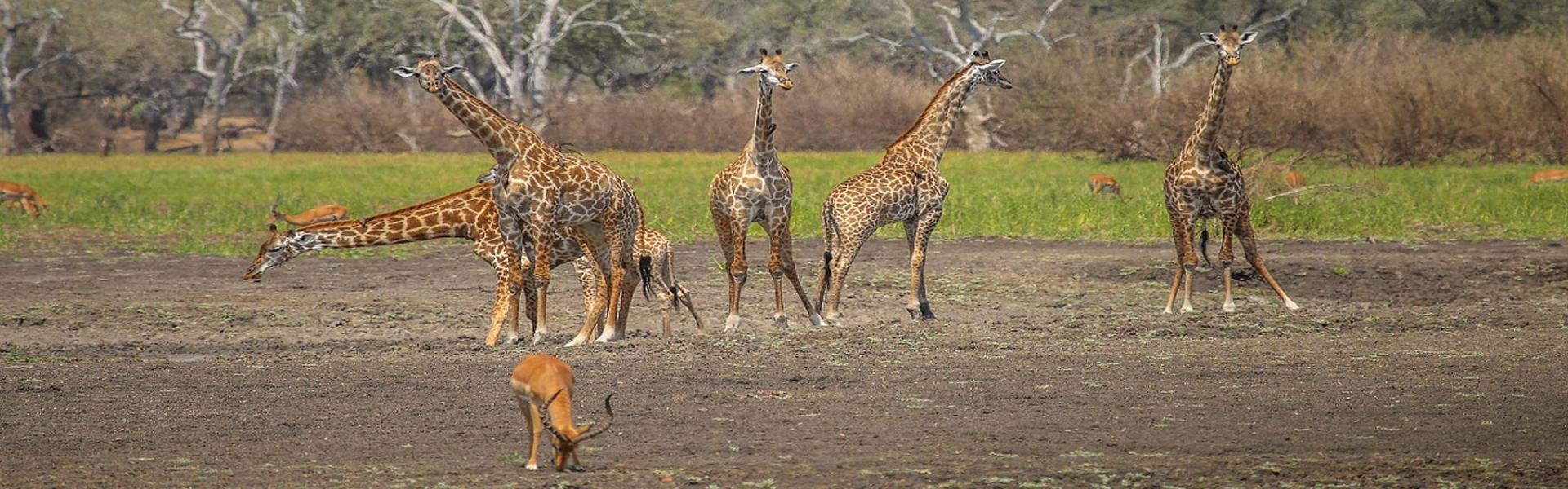 2 Days / 1 Night Selous Safari Trip